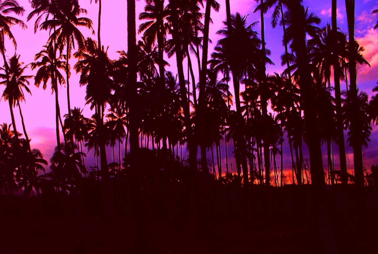 palm trees Hawaii